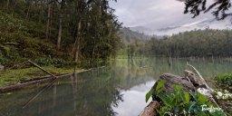 Mare à Poule d'eau – SALAZIE, La Réunion Photo n°1