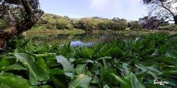 Piton de l'eau - Réunion Photo n°2