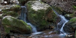 Les vasques de l'Huveaune dans le massif de la Sainte-Baume - Var (83) Photo n°6