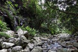 Cascade Chouchou - Réunion Photo n°7