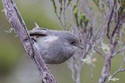 Oiseau blanc – Réunion