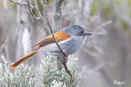 L'oiseau la Vierge femelle – Canon 70-200 L Photo n°2