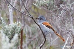 L'oiseau la Vierge femelle – Canon 70-200 L Photo n°3
