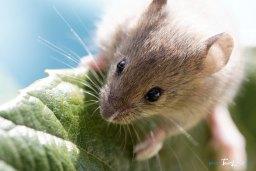 Une souris bien curieuse Photo n°1