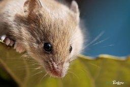 Une souris bien curieuse Photo n°2