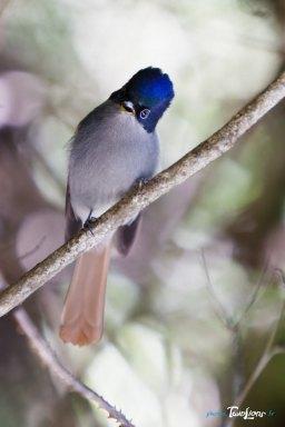 L'oiseau la Vierge - Réunion Photo n°1