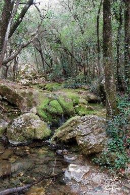 Les vasques de l'Huveaune dans le massif de la Sainte-Baume - Var (83) Photo n°8