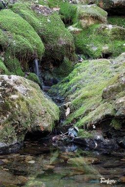 Les vasques de l'Huveaune dans le massif de la Sainte-Baume - Var (83) Photo n°7
