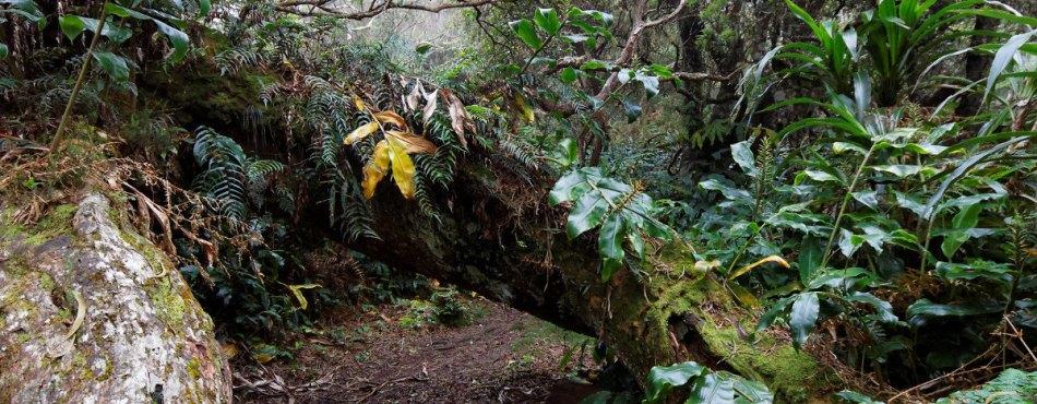 Chemin botanique de l'ilet Alcide - Réunion