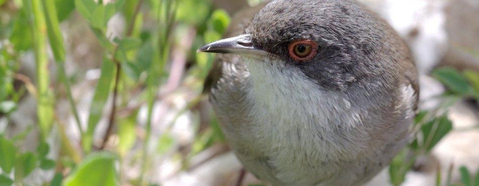 Photo macro d'un petit oiseau – Canon 50D Sigma 150 Macro