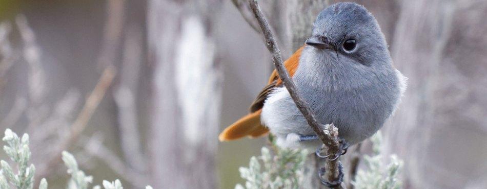 L'oiseau la Vierge femelle – Canon 70-200 L